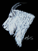 Mountain Goat Painting Prints - P Print by Bobbylee Farrier