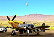 Racing Mustangs Posters - P51 Mustangs Lou IV and Strega 2010 Reno Air Races Poster by Gus McCrea