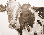Moo Moo Paintings - PA Cow Study 1 by Quinton Chapman
