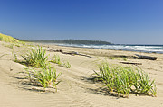 Dunes Photos - Pacific ocean shore on Vancouver Island by Elena Elisseeva