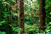 Fir Trees Photos - Pacific Rim National Park 14 by Terry Elniski