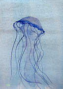 Jellyfish Drawings Framed Prints - Pacific Sea Nettle Framed Print by Tina McCurdy