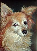 Canines Painting Framed Prints - Paco the Papillion Framed Print by Enzie Shahmiri