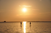 Palm Harbor Posters - Paddle Boarding Out of the Sunset Poster by Bill Cannon