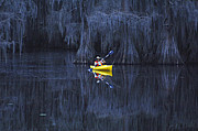 Caddo Framed Prints - Paddler At Caddo Lake Framed Print by Bob Christopher