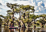 Tx Posters - Paddling In The Bayou Poster by Lana Trussell