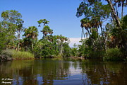 Florida Nature Photography Originals - Paddling Otter Creek by Barbara Bowen