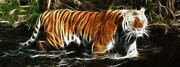 Tiger Print Framed Prints - Paddling Pool Framed Print by Tilly Williams