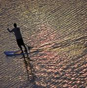 Stand Up Paddle Board Photos - Paddling the Pacific by Elizabeth Hoskinson