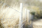 Sussex Prints - Pagham Harbour Fence Print by SVGiles