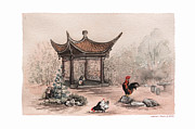 Watercolor Roosters Framed Prints - Pagoda chickens Framed Print by Nancy Pahl