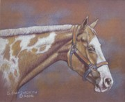 Dorothy Coatsworth Painting Posters - Paint Horse Poster by Dorothy Coatsworth