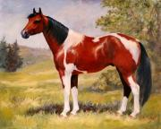 Paint Horse Paintings - Paint Horse Gelding Portrait Oil Painting - Gizmo by Kim Corpany