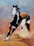 Pinto Painting Originals - Paint horse Sammy by Yvonne Hazelton