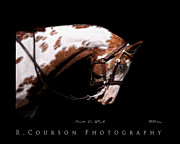 Horse Images Digital Art Prints - Paint In Black Print by Ryan Courson