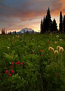 Mt. Rainier Photos - Paintbrush Sunset by Mike  Dawson