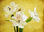 Lily Flowers - Painted Alstros by Cathie Tyler