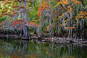 Big Cypress Bayou Photos - Painted Bayou by Lana Trussell