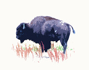 Bugel Prints - Painted Buffalo Print by Steve McKinzie