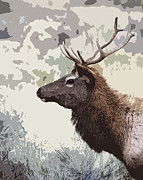 Bugel Prints - Painted Bull Elk Print by Steve McKinzie