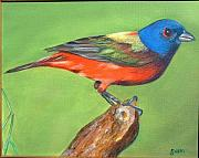 Bunting Originals - Painted Bunting by Gwendolyn Frazier