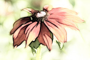 Fractalius Framed Prints - Painted Daisy Framed Print by Teresa Zieba