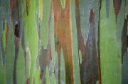Nature Paint Posters - Painted Eucalyptus Tree Bark Poster by Jenna Szerlag