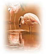 Flamingoes Art - Painted Flamingoes by Sharon Lisa Clarke