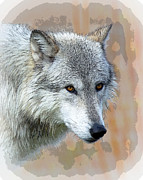 Bugel Prints - Painted Grey Wolf Print by Steve McKinzie
