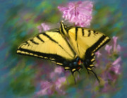 Tiger Swallowtail Digital Art Prints - Painted Lady Print by Crystal Garner