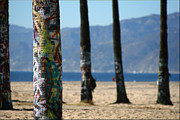 Venice Beach Palms Framed Prints - Painted Palms Framed Print by Shane Rees