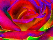 Vivid Digital Art - Painted Rose 1 by Will Borden