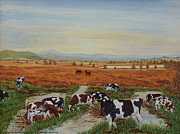 Plane Paintings - Painting Cows on Cors Caron by Edward McNaught-Davis