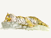 Watercolor Tiger Framed Prints - Painting Of A Sleeping Tiger Framed Print by Kazuhiro Iwata