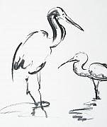 Fauna Drawings Originals - Pair of Little Egrets by Abin Raj