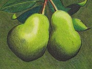 Pears Drawings Framed Prints - Pair of Pears Framed Print by John Lasco
