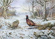 Birds In Snow Posters - Pair of Pheasants with a Wren Poster by Carl Donner