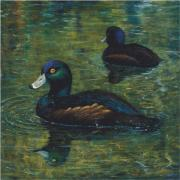 Waterfowl Paintings - pair of Scaup by Peter Jean Caley