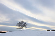 Cold Temperature Art - Pair Of Trees On Hill At Sunset by I am happy taking photographs.