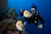 Palau Underwater Print by Dave Fleetham - Printscapes