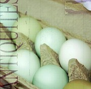 Eggs Digital Art - Pale Blue Eggs by Cathie Tyler