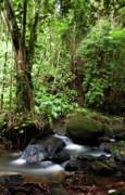 Charmian Vistaunet - Pali Forest
