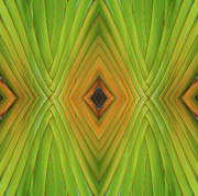 Michelle Wiarda - Palm Abstract IV