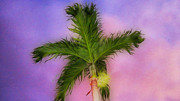 Fine Dining Prints Posters - Palm against Purple sky 2 Poster by Cheryl Young