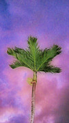 Bathroom Posters - Palm against purple sky Poster by Cheryl Young