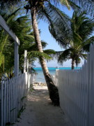 Picket Fences Photos - Palm Alley by Karen Wiles