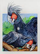 Australian Wildlife Prints - Palm Cockatoos Print by Robert Lacy