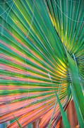 Palmetto Plants Photos - Palm Colors by Jan Amiss Photography