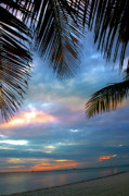 """blue Sunset"" Prints - Palm Curtains Print by Susanne Van Hulst"
