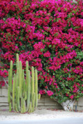 Cactus Flowers Photos - Palm Desert Blooms by Carol  Eliassen